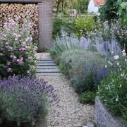 lang bloeiende vaste planten bij hoveniersbedrijf Ultima Flora