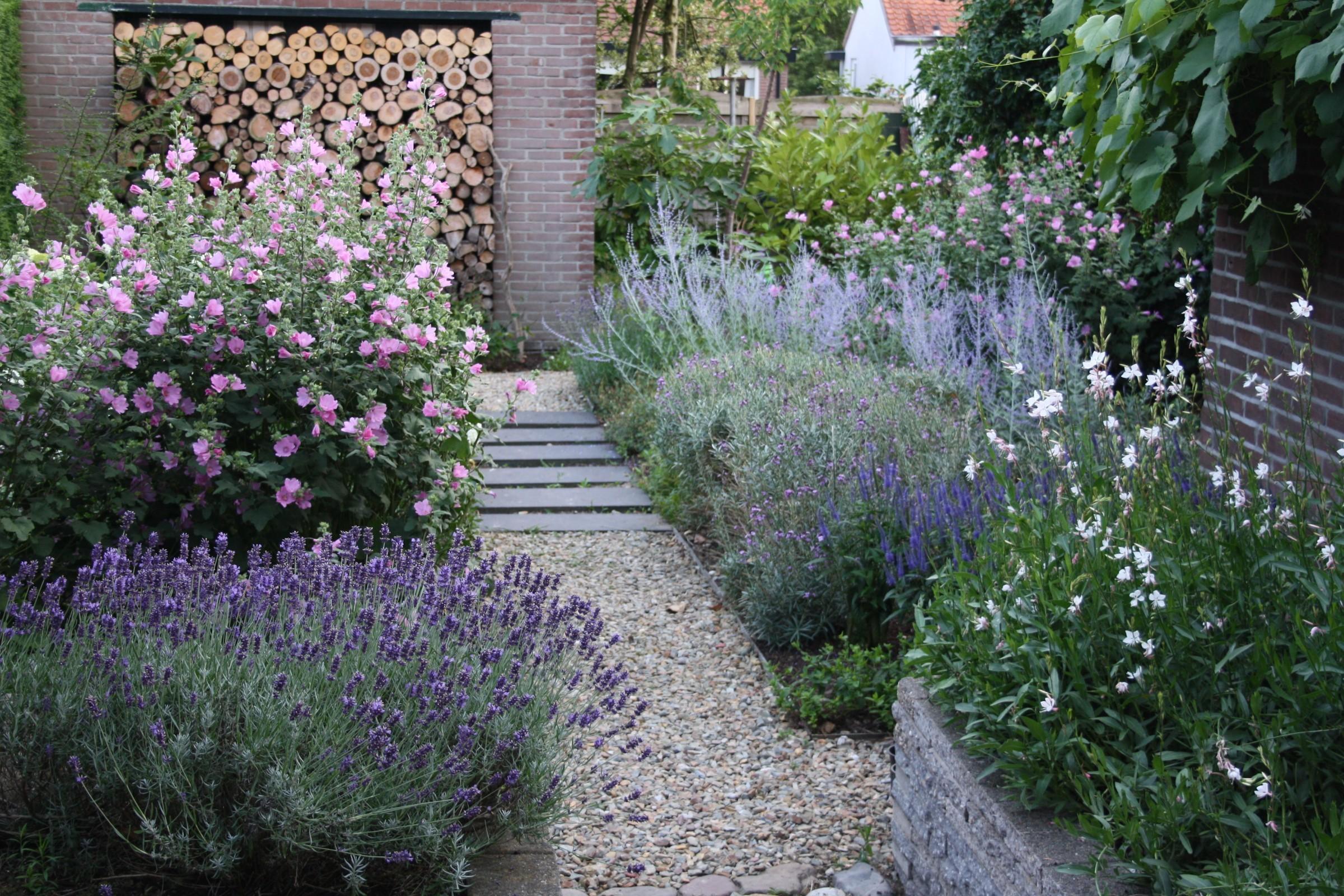 Vaste Planten Tuin : Langbloeiende vaste planten ultima flora