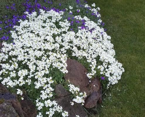 Onderhoudsvriendelijke tuin maken