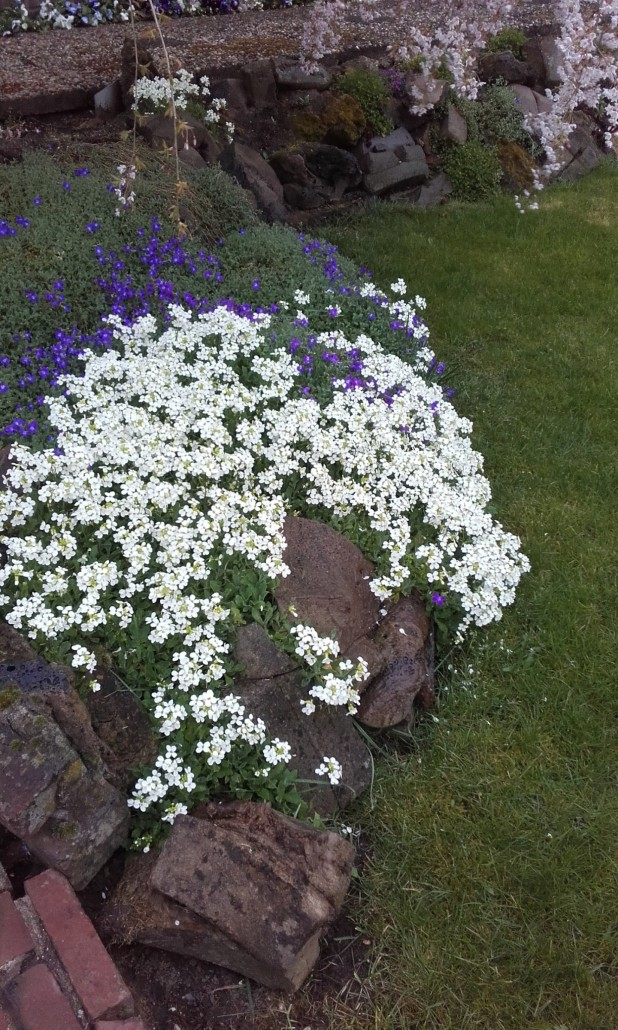 Tips voor een onderhoudsvriendelijke tuin ultima flora for Onderhoudsvriendelijke tuin aanleggen