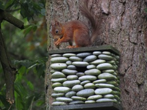 Eekhoorn op nestkastje in de tuin