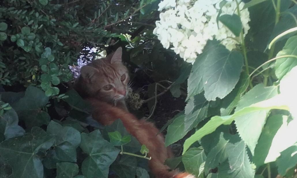 Katten Verjagen Met Planten Ultima Flora