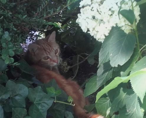 Katten verjagen, weren, met planten