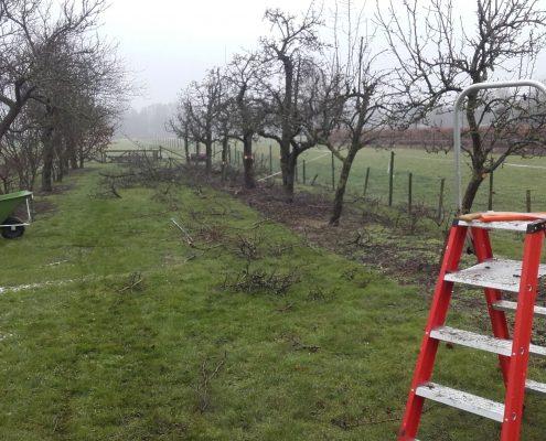 boomgaard laten snoeien